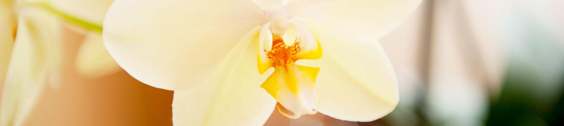 PWA6842.1_Orchidee_2_OK